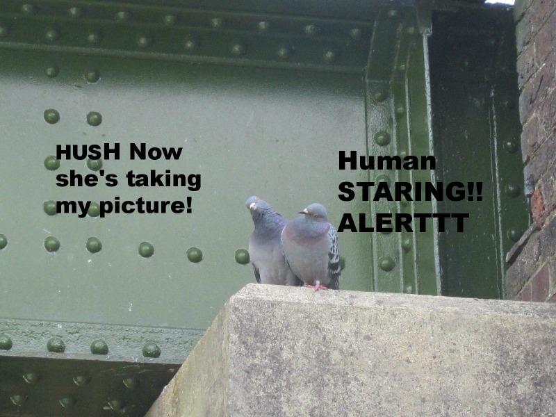 Pigeons posing for me