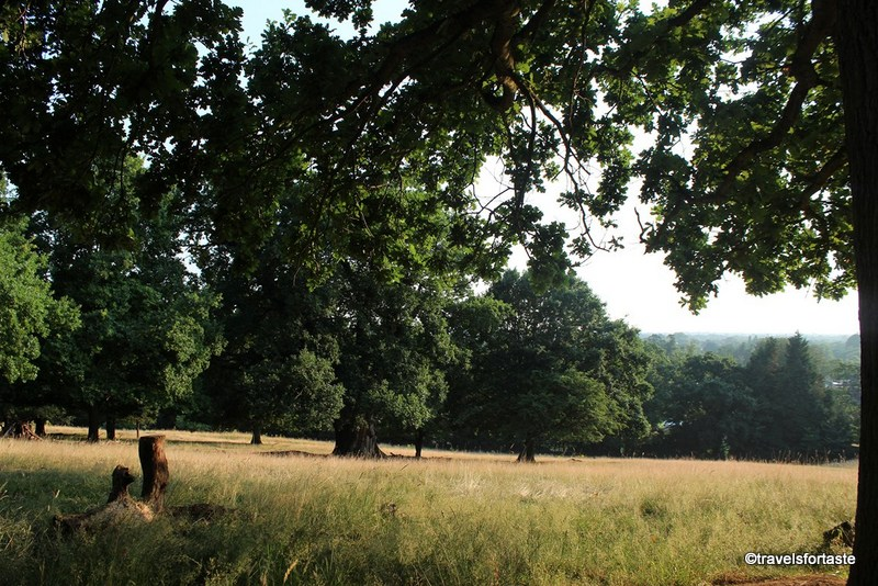 Family days out - Richmond Park